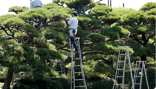 大きい樹木 にも安全徹底対応